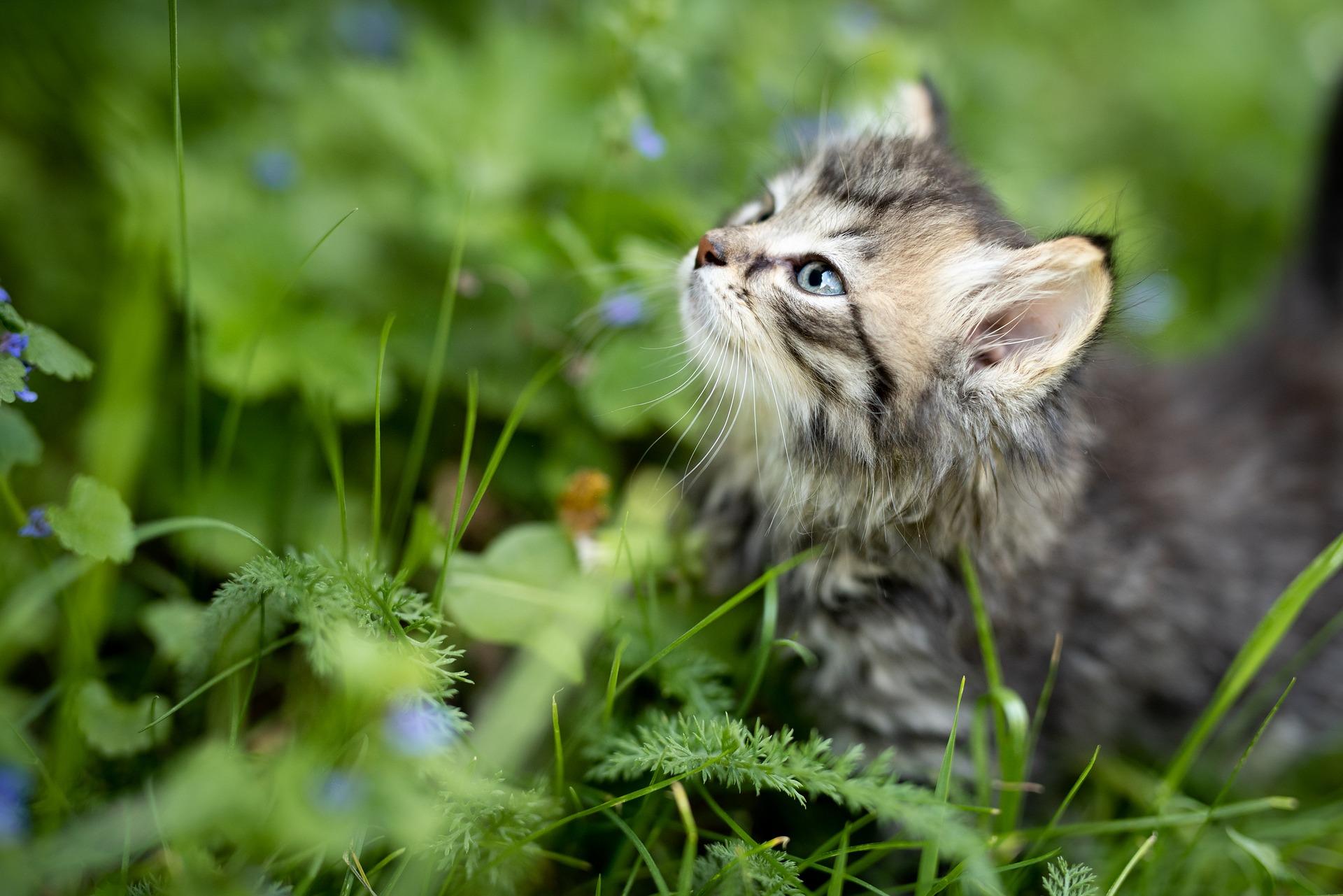 Les questions à se poser avant d'adopter un chaton