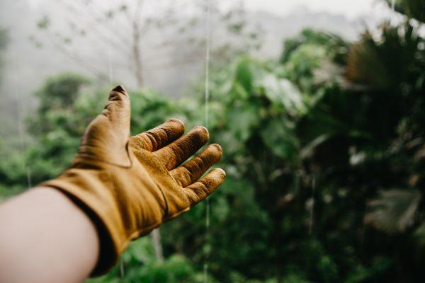 Quels sont les avantages à s'occuper d'un jardin?