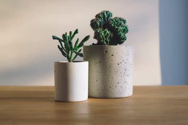 Des plantes pour son bien-être !